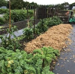 Community Garden - Te Roopu Huarahi Oranga